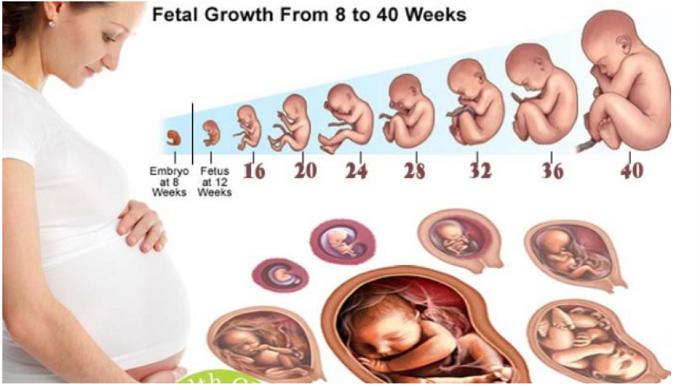 Bảng cân nặng chuẩn thai nh